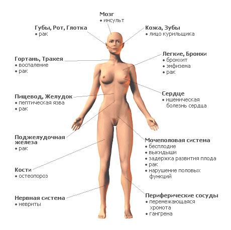 темы модулей по биологии здоровое питание